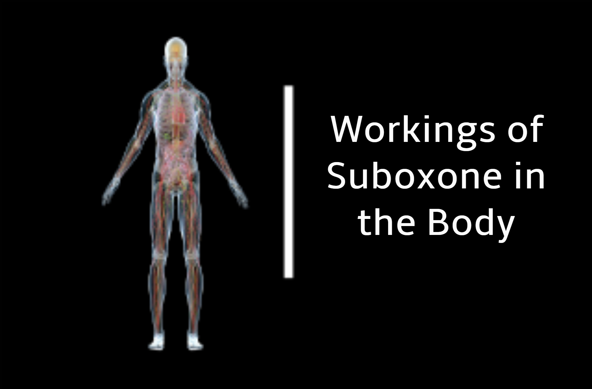 suboxone doctor in Norton